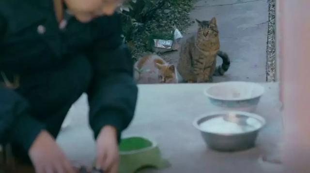 cat201901301