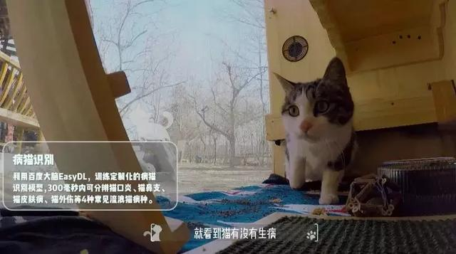 cat201901304