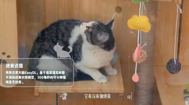 cat201901305